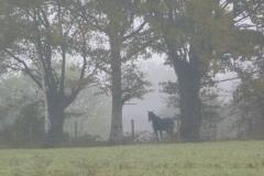 paard in de verte...